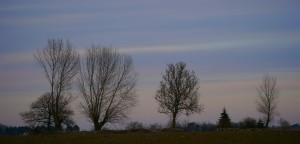 Evening Lights 1