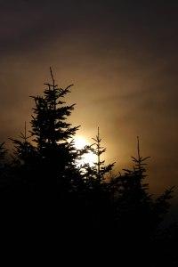 Evening Lights 3