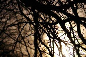 Evening Lights 4