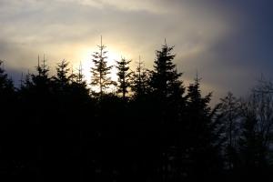 Evening Lights 5