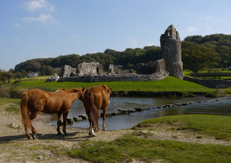Horses at Ogmore Castle